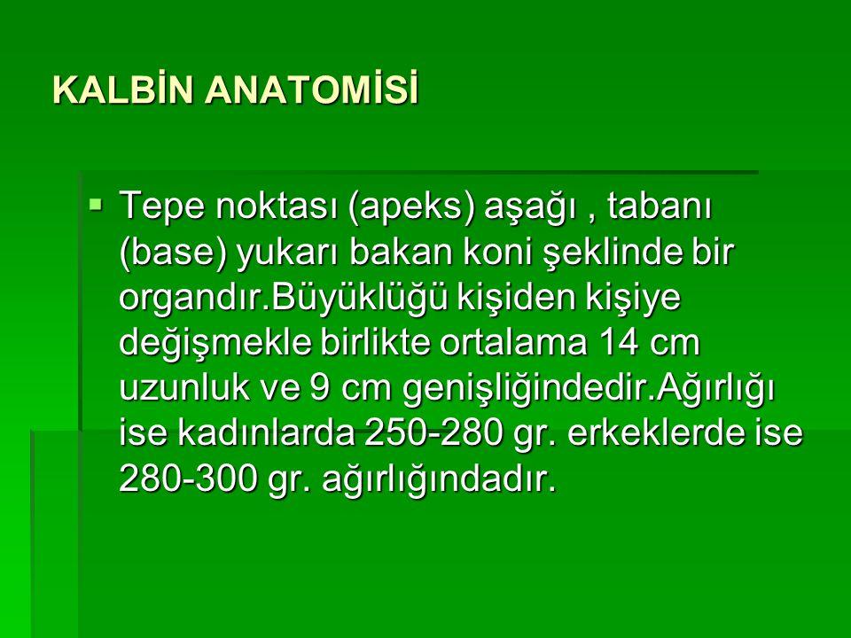 KALBİN ANATOMİSİ