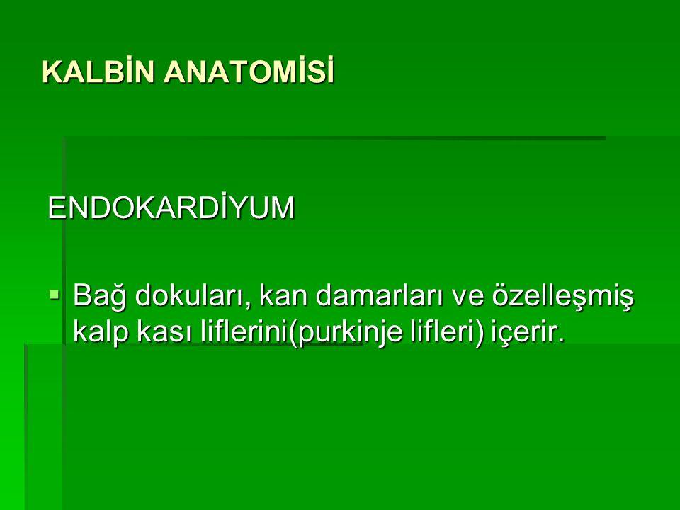 KALBİN ANATOMİSİ ENDOKARDİYUM.