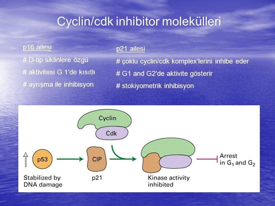 Cyclin/cdk inhibitor molekülleri