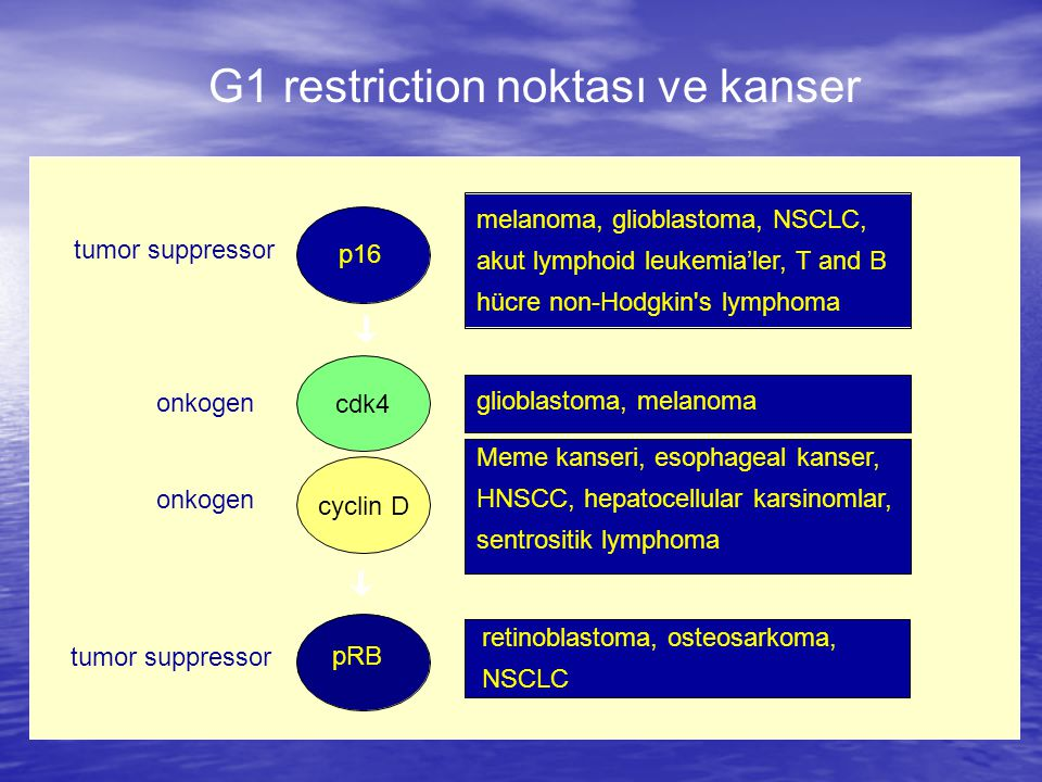 G1 restriction noktası ve kanser