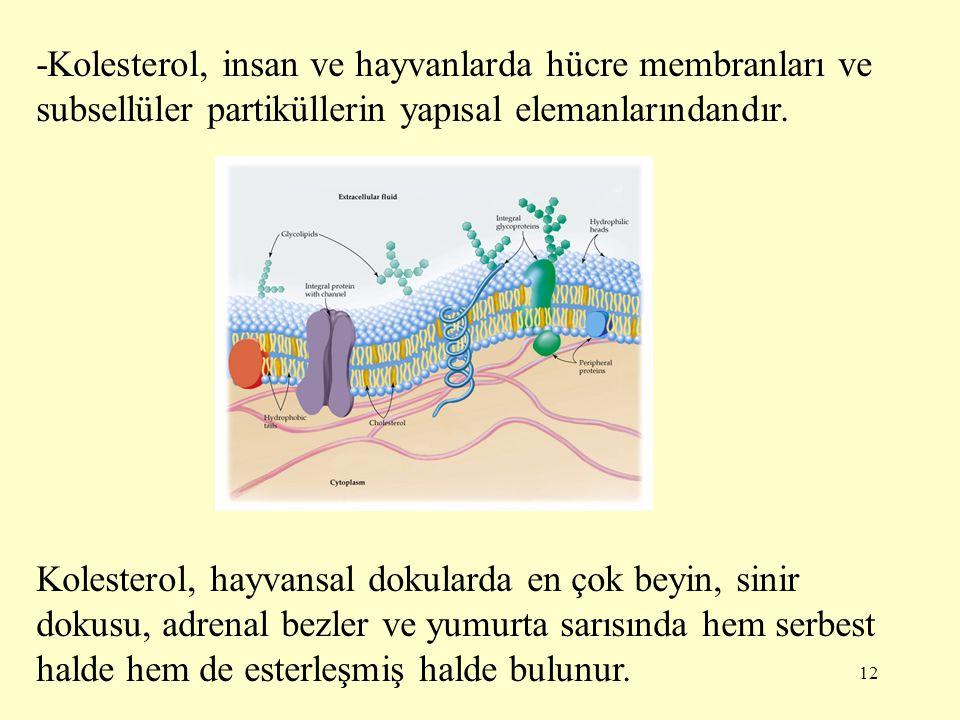 -Kolesterol, insan ve hayvanlarda hücre membranları ve subsellüler partiküllerin yapısal elemanlarındandır.