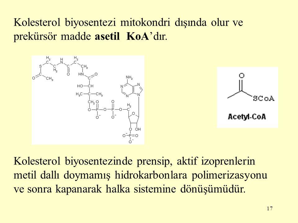 Kolesterol biyosentezi mitokondri dışında olur ve prekürsör madde asetil KoA'dır.