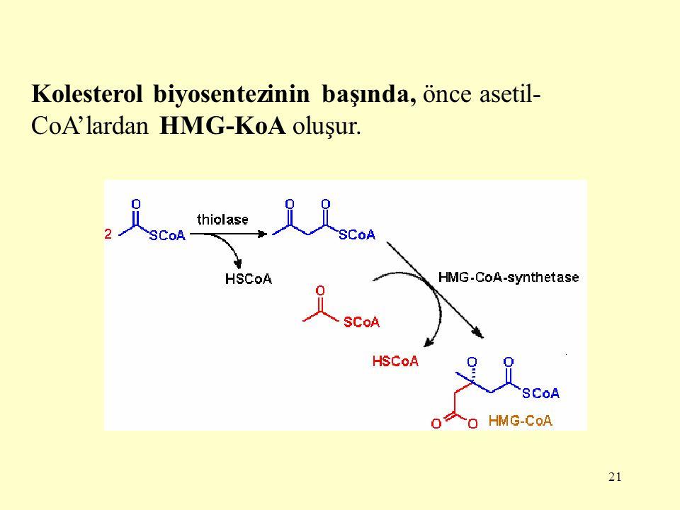 Kolesterol biyosentezinin başında, önce asetil-CoA'lardan HMG-KoA oluşur.