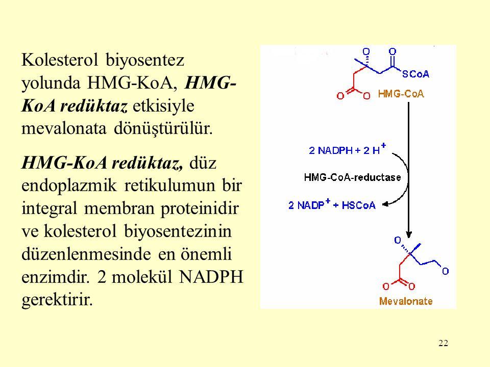 Kolesterol biyosentez yolunda HMG-KoA, HMG-KoA redüktaz etkisiyle mevalonata dönüştürülür.
