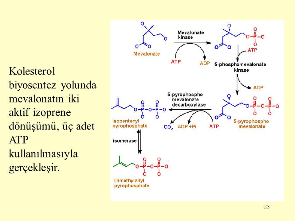 Kolesterol biyosentez yolunda mevalonatın iki aktif izoprene dönüşümü, üç adet ATP kullanılmasıyla gerçekleşir.