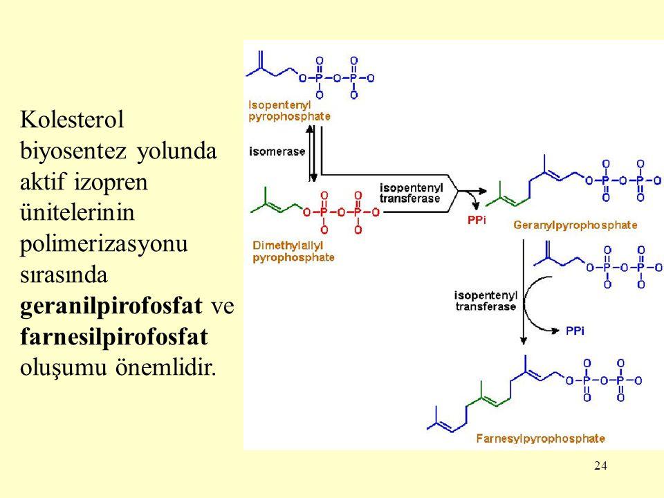Kolesterol biyosentez yolunda aktif izopren ünitelerinin polimerizasyonu sırasında geranilpirofosfat ve farnesilpirofosfat oluşumu önemlidir.