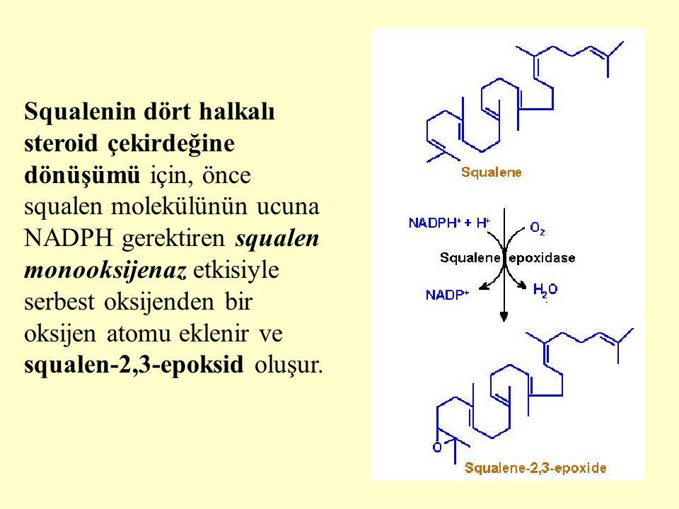 Squalenin dört halkalı steroid çekirdeğine dönüşümü için, önce squalen molekülünün ucuna NADPH gerektiren squalen monooksijenaz etkisiyle serbest oksijenden bir oksijen atomu eklenir ve squalen-2,3-epoksid oluşur.