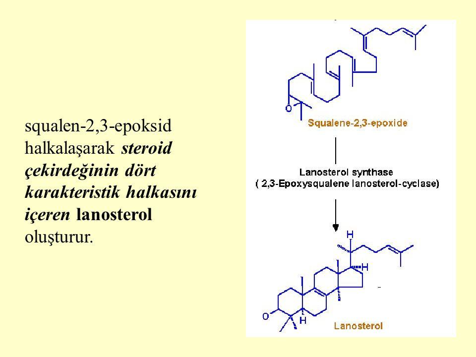 squalen-2,3-epoksid halkalaşarak steroid çekirdeğinin dört karakteristik halkasını içeren lanosterol oluşturur.