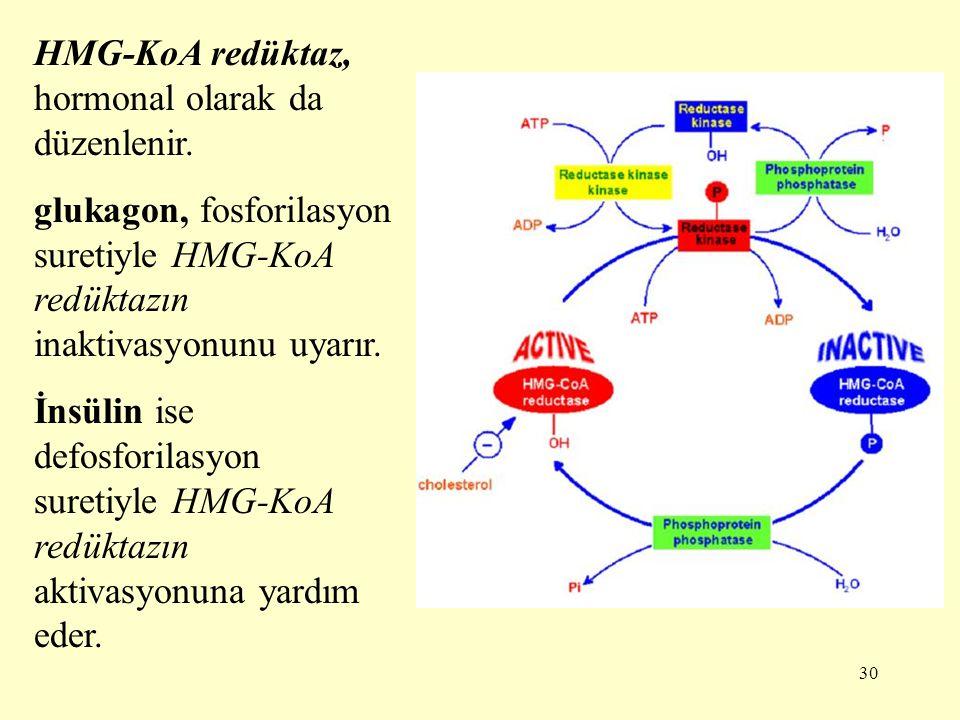 HMG-KoA redüktaz, hormonal olarak da düzenlenir.