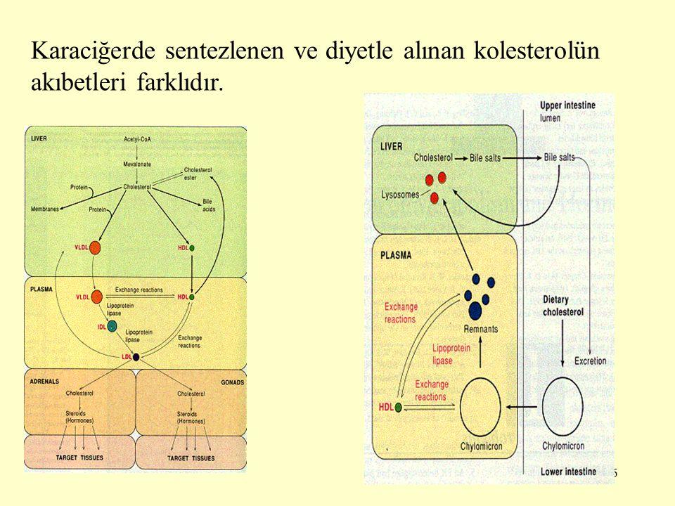 Karaciğerde sentezlenen ve diyetle alınan kolesterolün akıbetleri farklıdır.