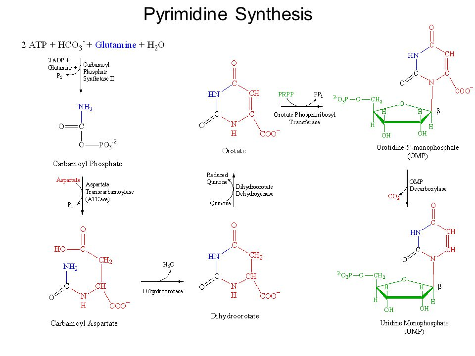 Pyrimidine Synthesis
