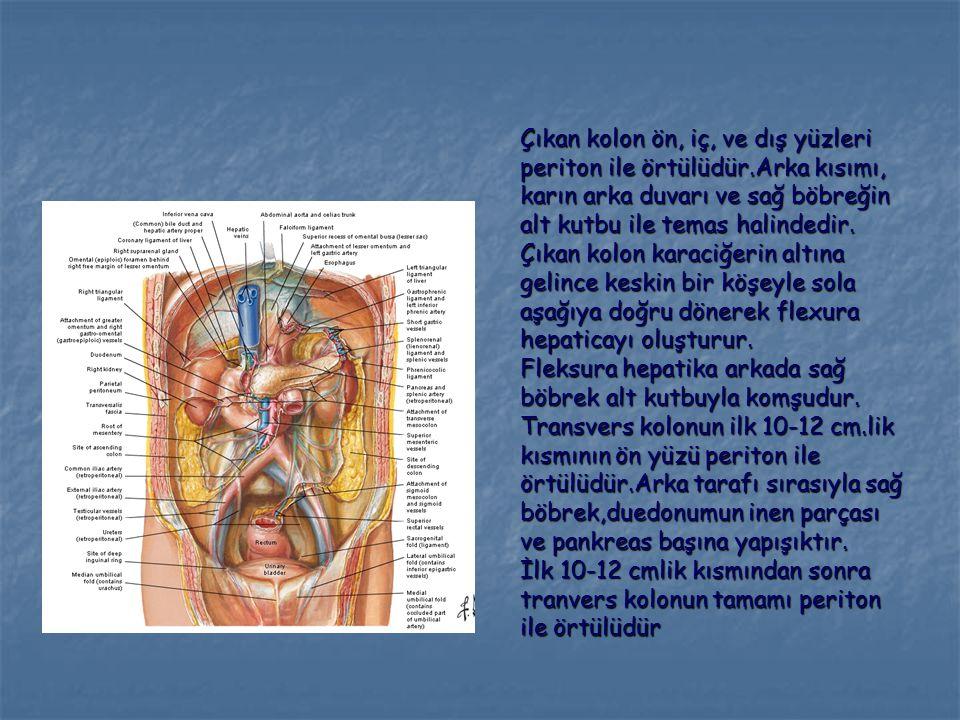 Çıkan kolon ön, iç, ve dış yüzleri periton ile örtülüdür