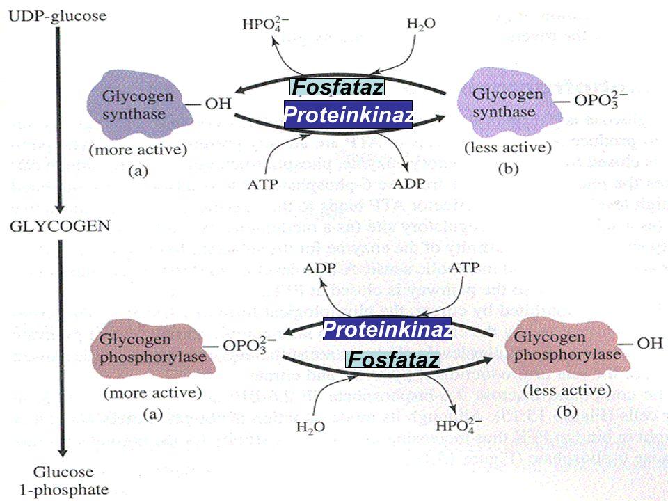Fosfataz Proteinkinaz Proteinkinaz Fosfataz