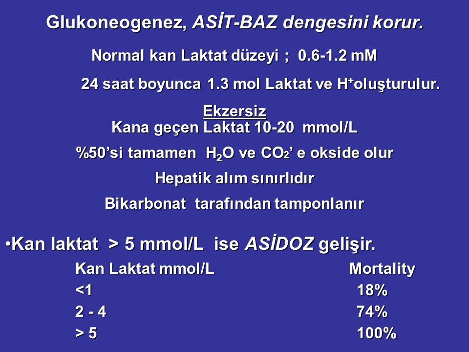 Glukoneogenez, ASİT-BAZ dengesini korur.