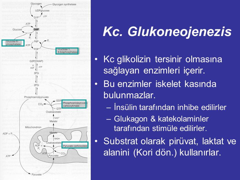 Kc. Glukoneojenezis Kc glikolizin tersinir olmasına sağlayan enzimleri içerir. Bu enzimler iskelet kasında bulunmazlar.