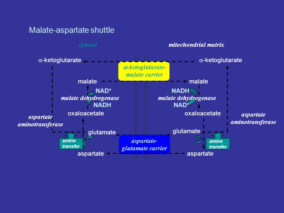 aspartate aminotransferase aspartate aminotransferase