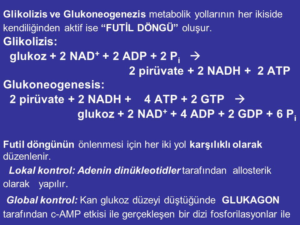 2 pirüvate + 2 NADH + 4 ATP + 2 GTP 