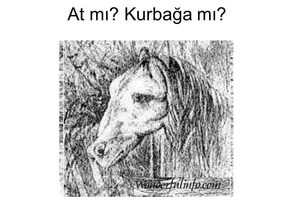 At mı Kurbağa mı