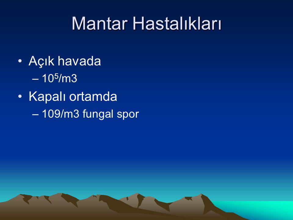 Mantar Hastalıkları Açık havada Kapalı ortamda 105/m3