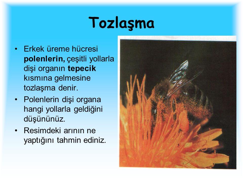 Tozlaşma Erkek üreme hücresi polenlerin, çeşitli yollarla dişi organın tepecik kısmına gelmesine tozlaşma denir.