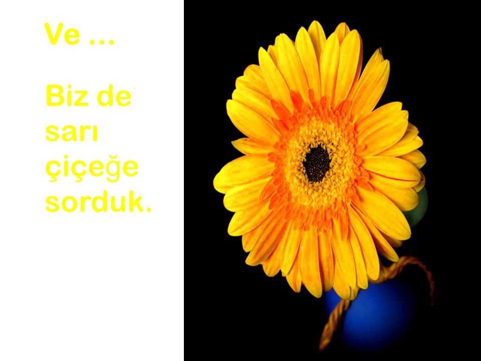 Ve … Biz de sarı çiçeğe sorduk.