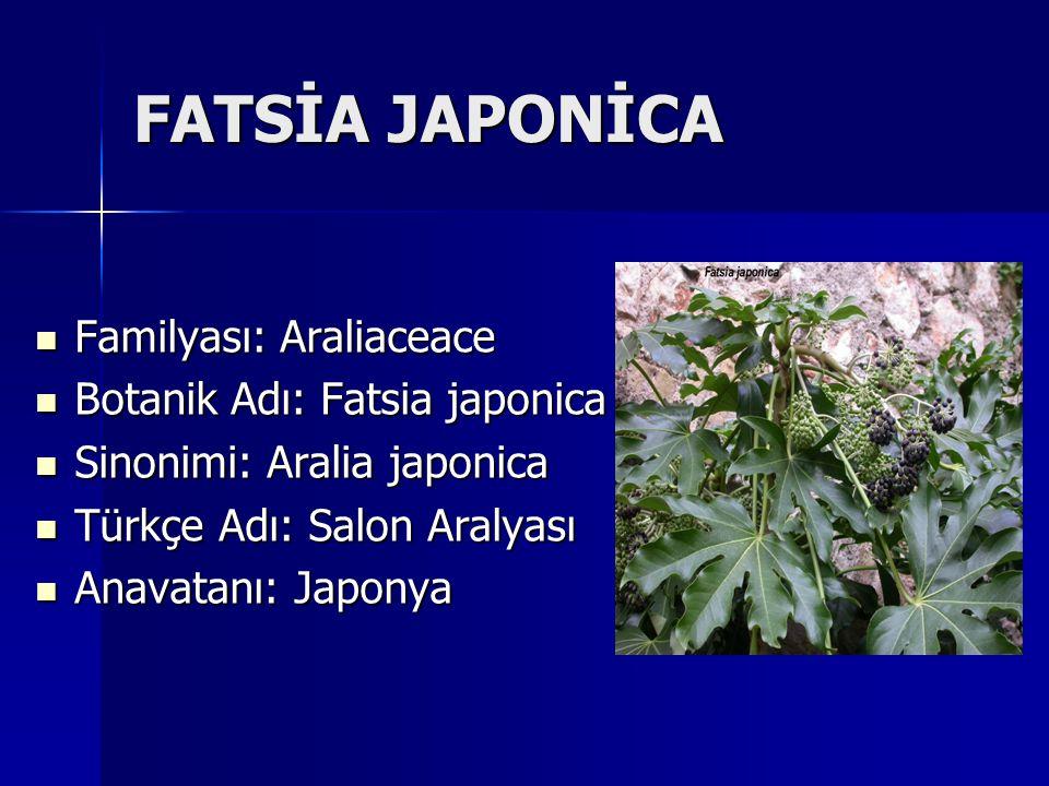 FATSİA JAPONİCA Familyası: Araliaceace Botanik Adı: Fatsia japonica