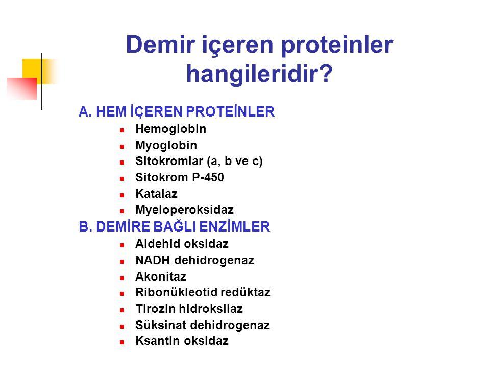 Demir içeren proteinler hangileridir