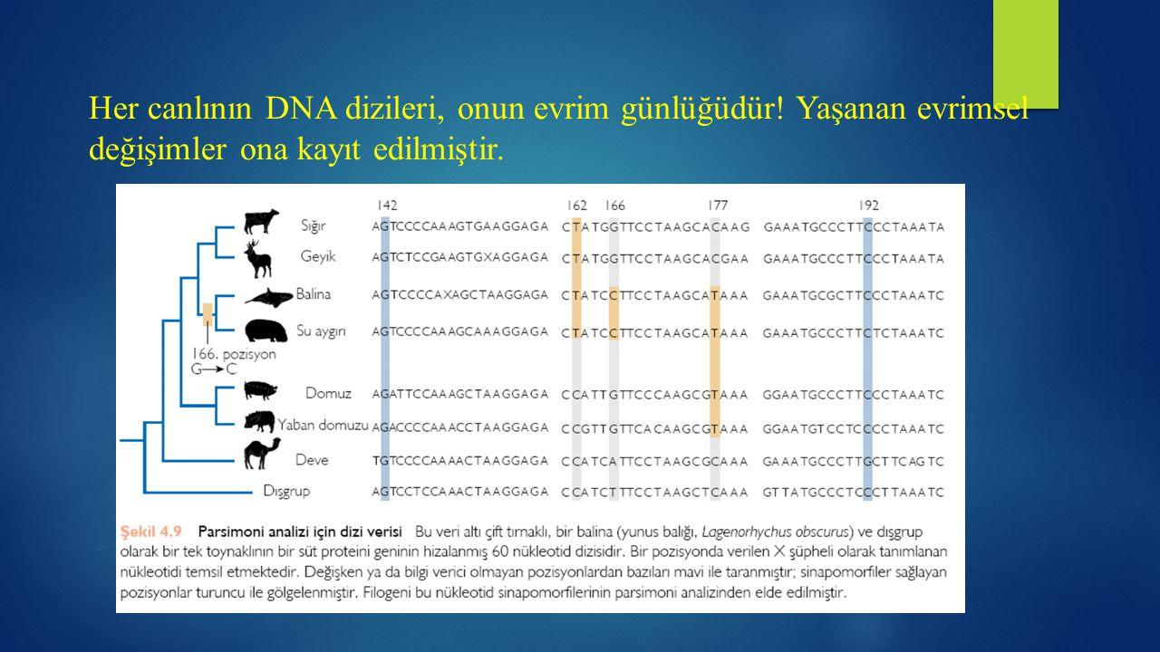 Her canlının DNA dizileri, onun evrim günlüğüdür