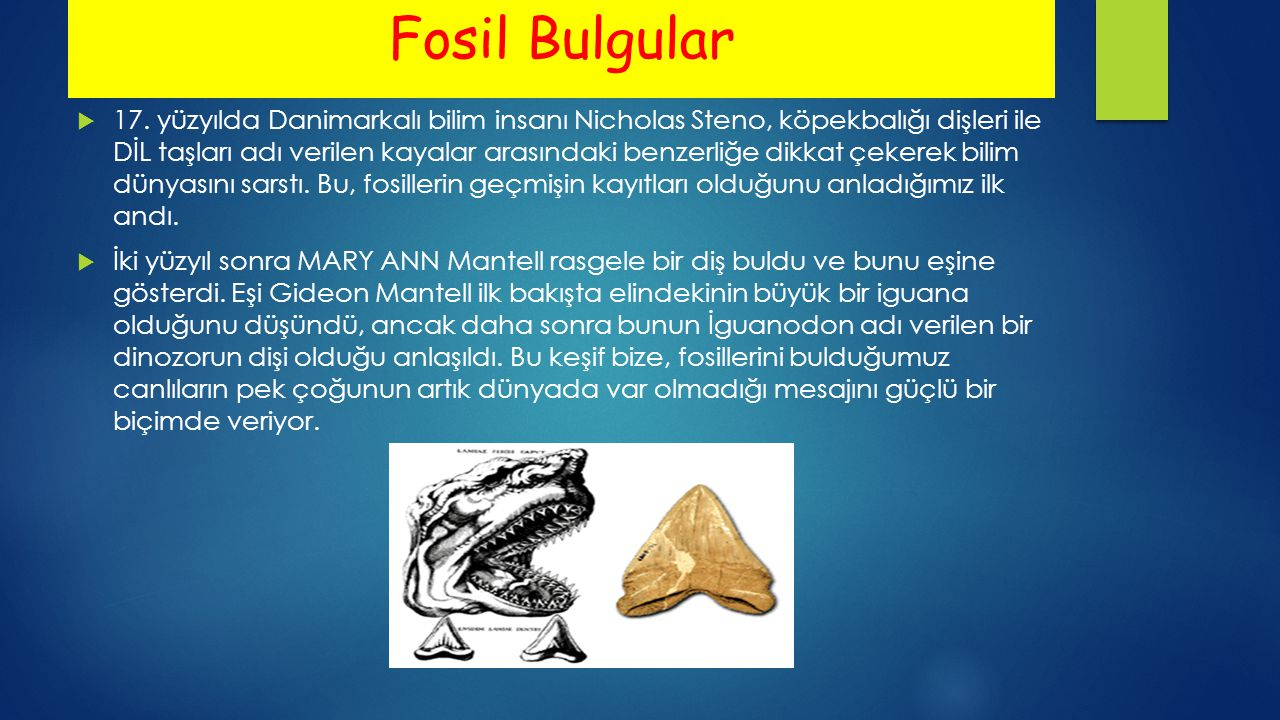Fosil Bulgular