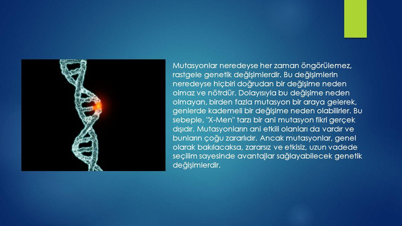 Mutasyonlar neredeyse her zaman öngörülemez, rastgele genetik değişimlerdir.