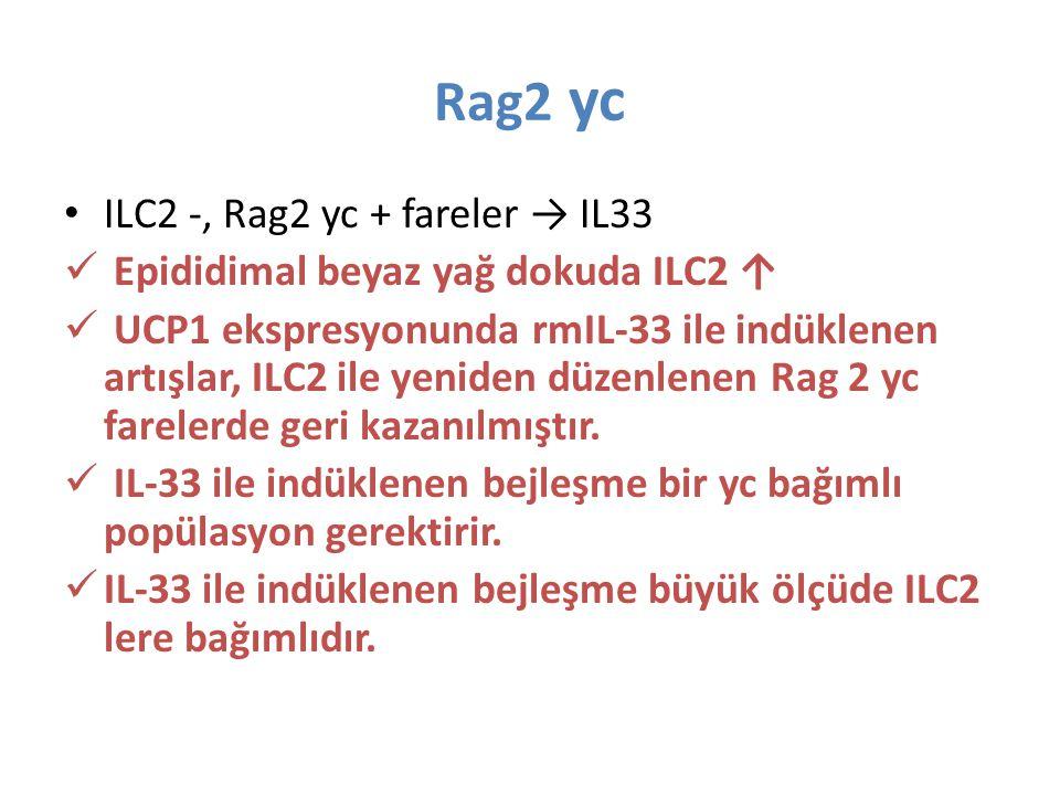 Rag2 yc ILC2 -, Rag2 yc + fareler → IL33