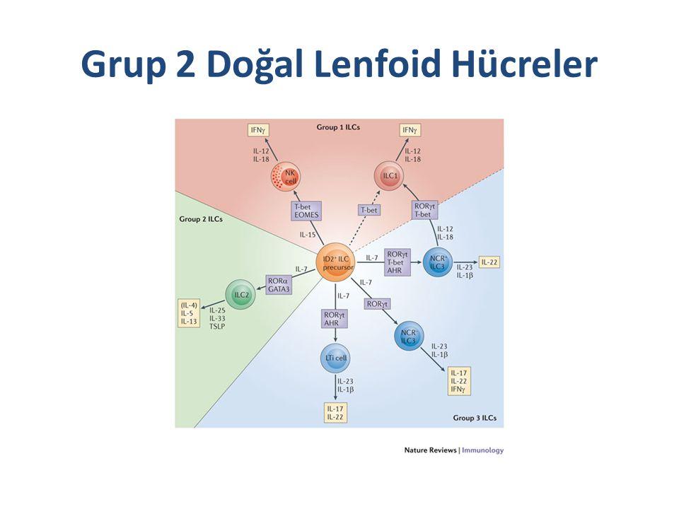 Grup 2 Doğal Lenfoid Hücreler