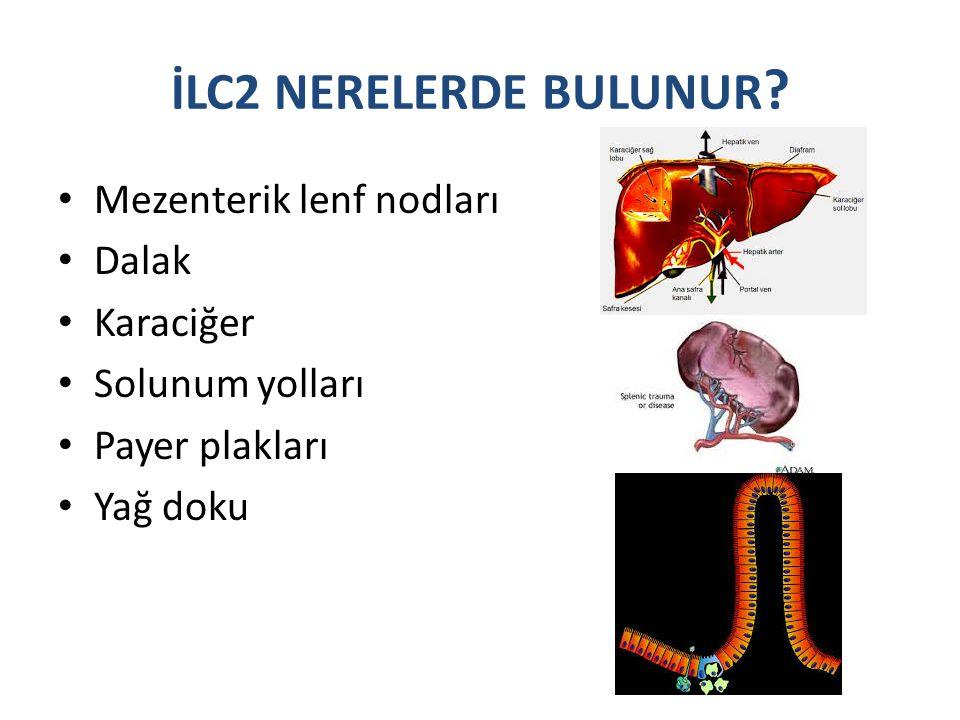 İLC2 NERELERDE BULUNUR Mezenterik lenf nodları Dalak Karaciğer