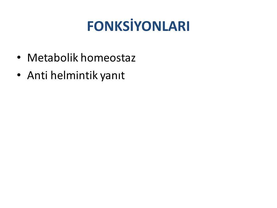 FONKSİYONLARI Metabolik homeostaz Anti helmintik yanıt