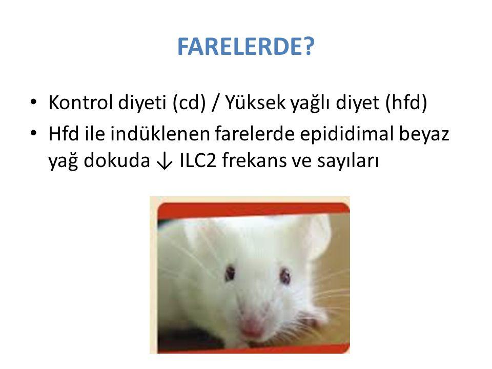 FARELERDE Kontrol diyeti (cd) / Yüksek yağlı diyet (hfd)