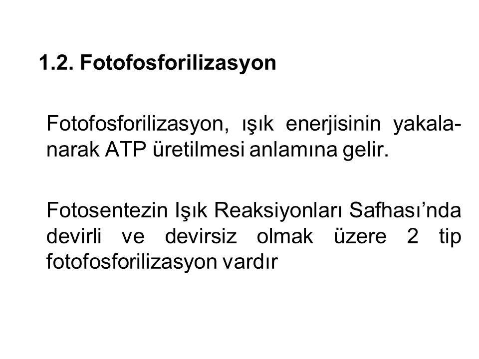 1.2. Fotofosforilizasyon Fotofosforilizasyon, ışık enerjisinin yakala-narak ATP üretilmesi anlamına gelir.