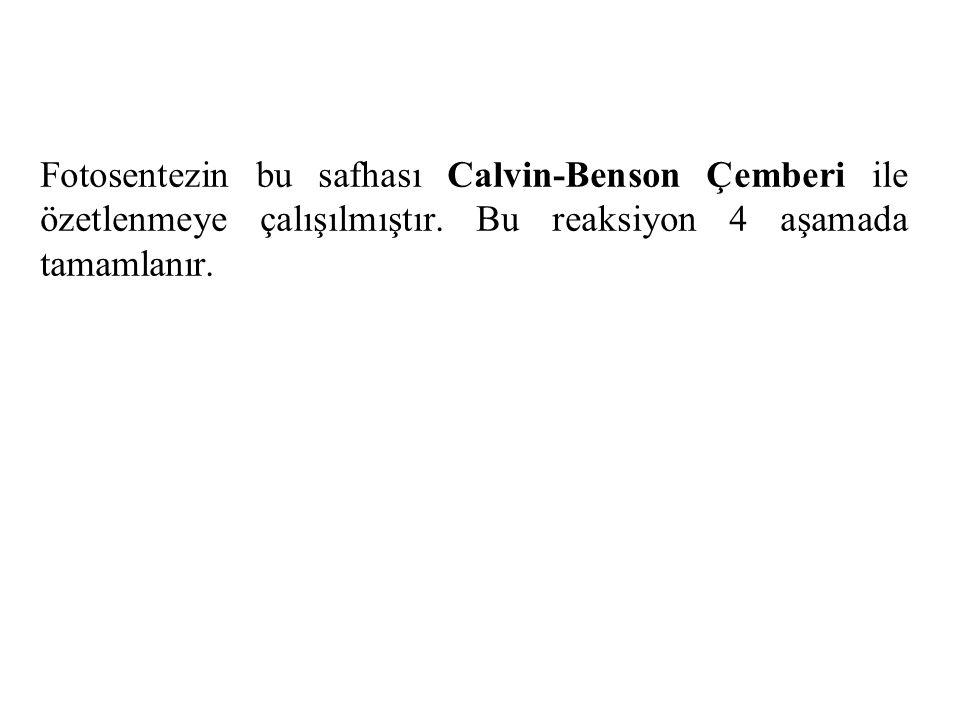 Fotosentezin bu safhası Calvin-Benson Çemberi ile özetlenmeye çalışılmıştır.