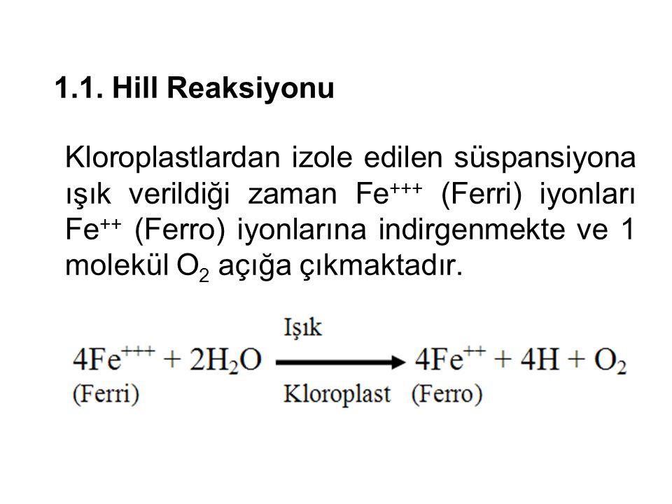 1.1. Hill Reaksiyonu