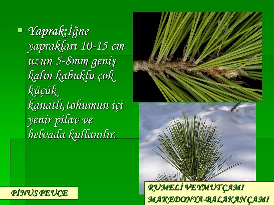 Yaprak:İğne yaprakları 10-15 cm uzun 5-8mm geniş kalın kabuklu çok küçük kanatlı,tohumun içi yenir pilav ve helvada kullanılır.