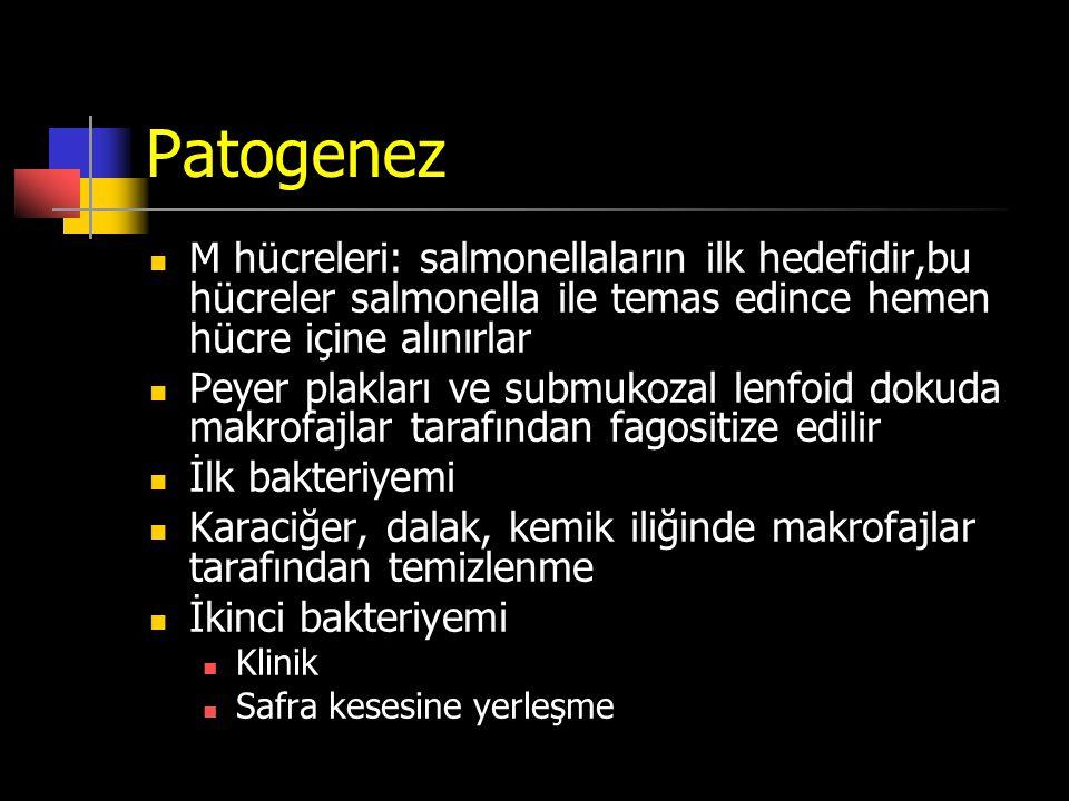 Patogenez M hücreleri: salmonellaların ilk hedefidir,bu hücreler salmonella ile temas edince hemen hücre içine alınırlar.