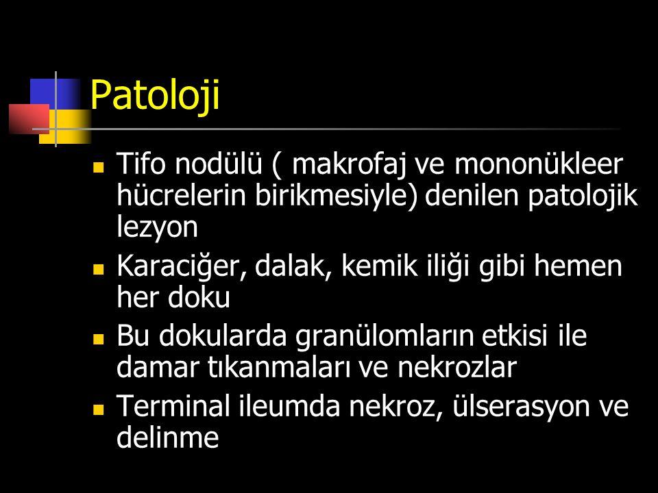 Patoloji Tifo nodülü ( makrofaj ve mononükleer hücrelerin birikmesiyle) denilen patolojik lezyon. Karaciğer, dalak, kemik iliği gibi hemen her doku.