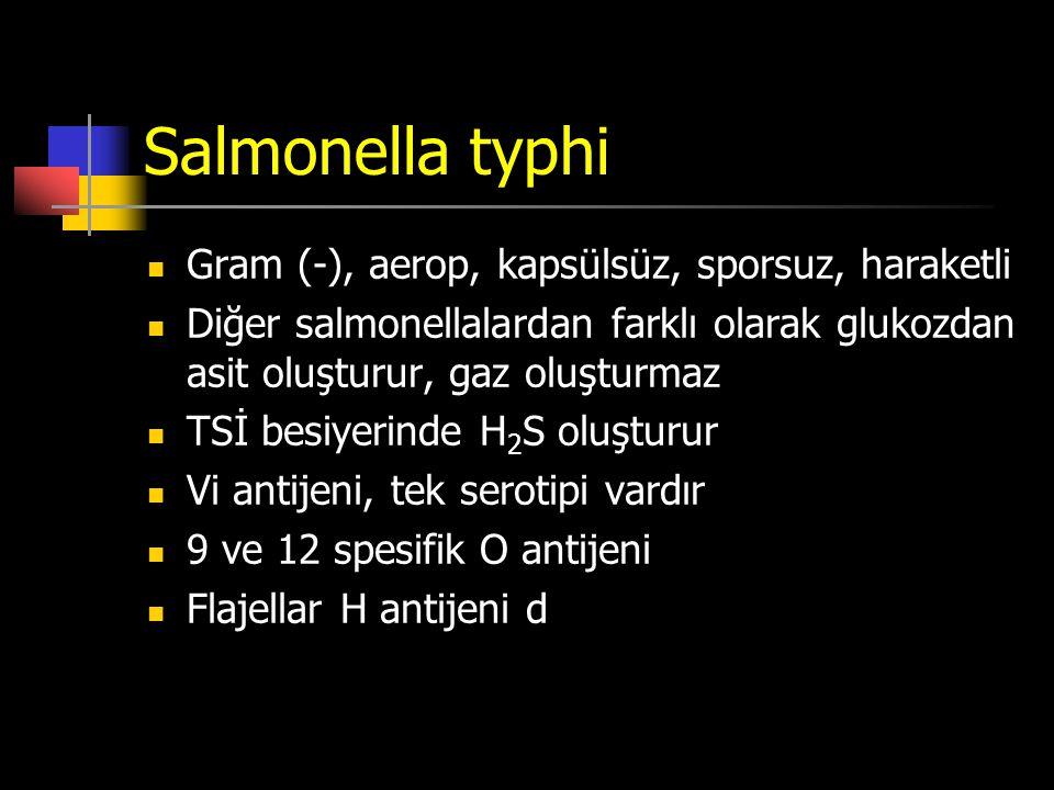 Salmonella typhi Gram (-), aerop, kapsülsüz, sporsuz, haraketli