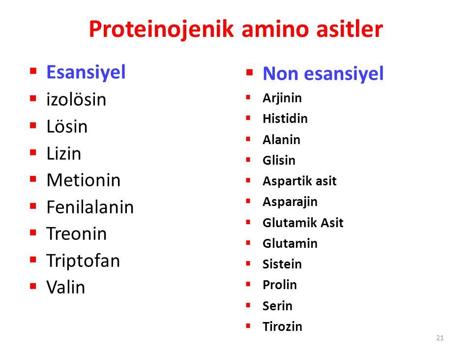 Proteinojenik amino asitler