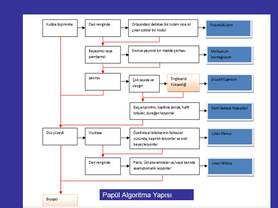 Papül Algoritma Yapısı