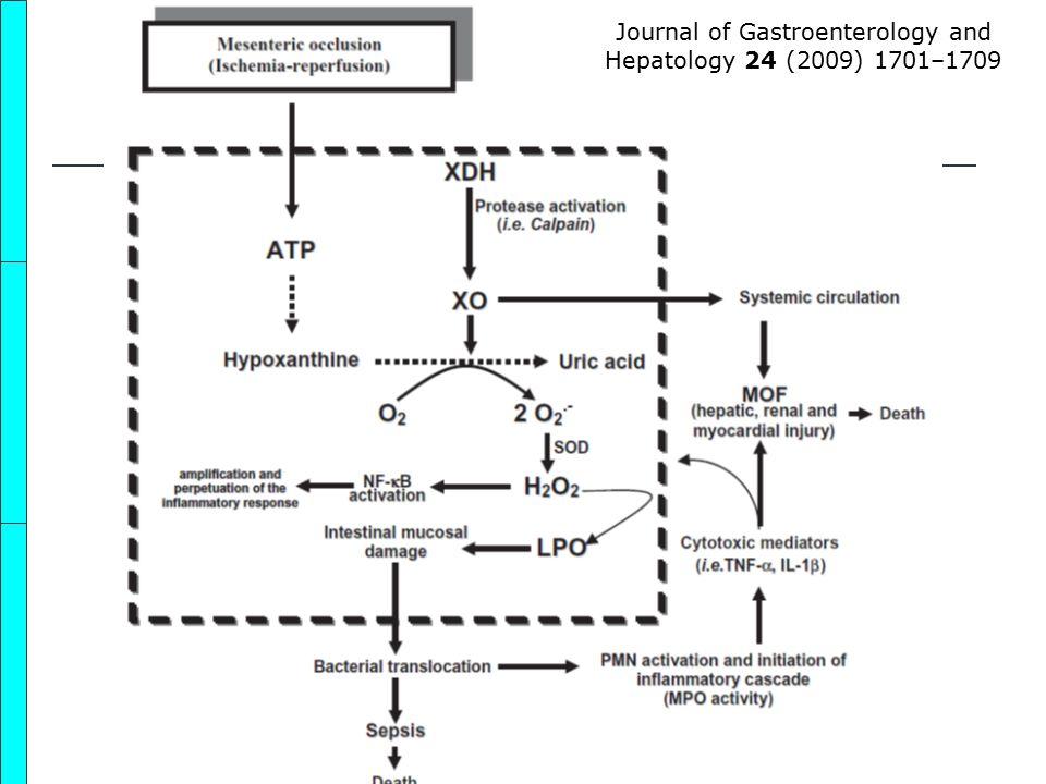 Journal of Gastroenterology and Hepatology 24 (2009) 1701–1709