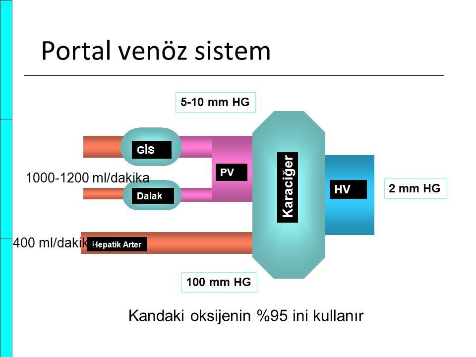 Portal venöz sistem Kandaki oksijenin %95 ini kullanır Karaciğer