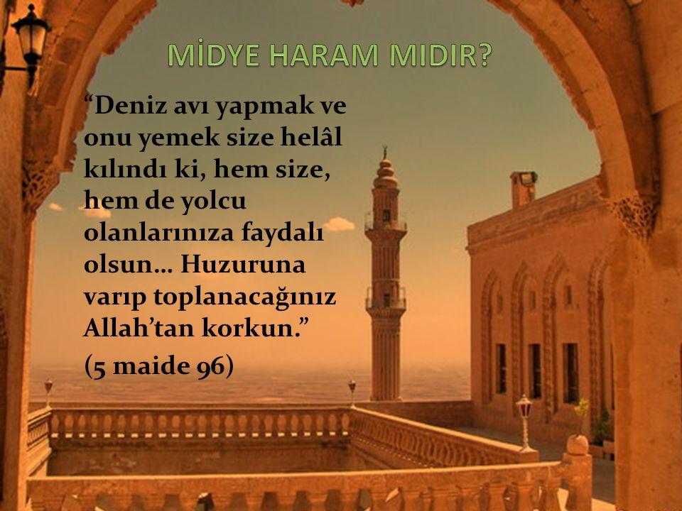 MİDYE HARAM MIDIR