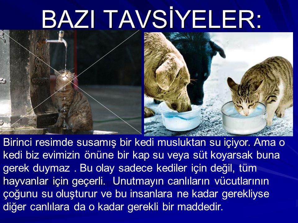 BAZI TAVSİYELER:
