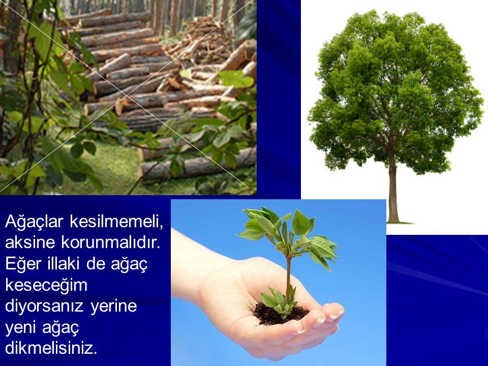 Ağaçlar kesilmemeli, aksine korunmalıdır