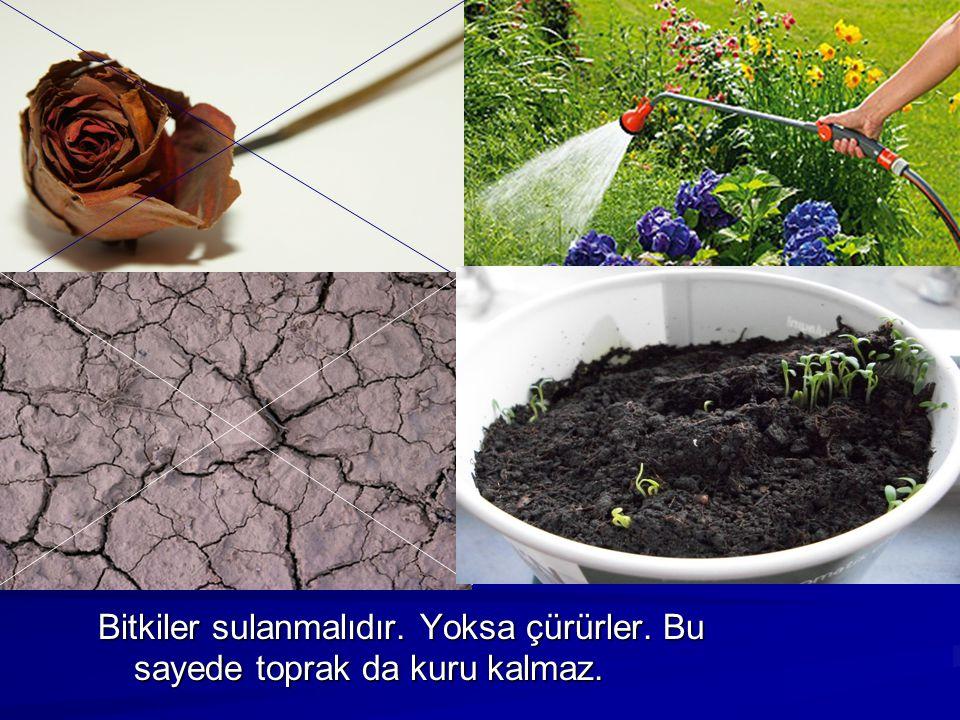 Bitkiler sulanmalıdır. Yoksa çürürler. Bu sayede toprak da kuru kalmaz.
